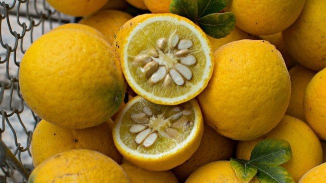 Японский лимон юдзу (юзу): фото и описание фруктов, применение цитруса в кулинарии и медицине